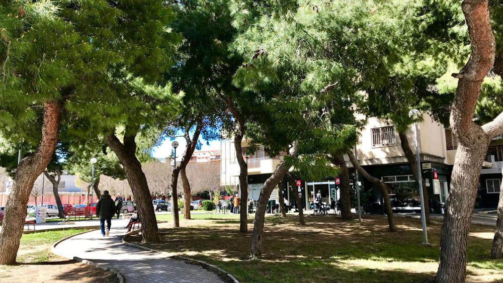 Foggia più verde: da Enterra 250 alberi per la compensazione ambientale